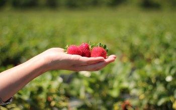 Wallpaper: Taste the Strawberries