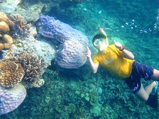 Pulau Pramuka Snorkling