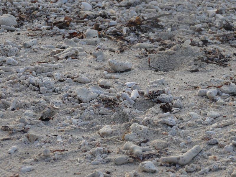 PHILIPPINES : Plage de coraux / 5 jours sur Siquijor & Apo Island / www.by-laura.fr