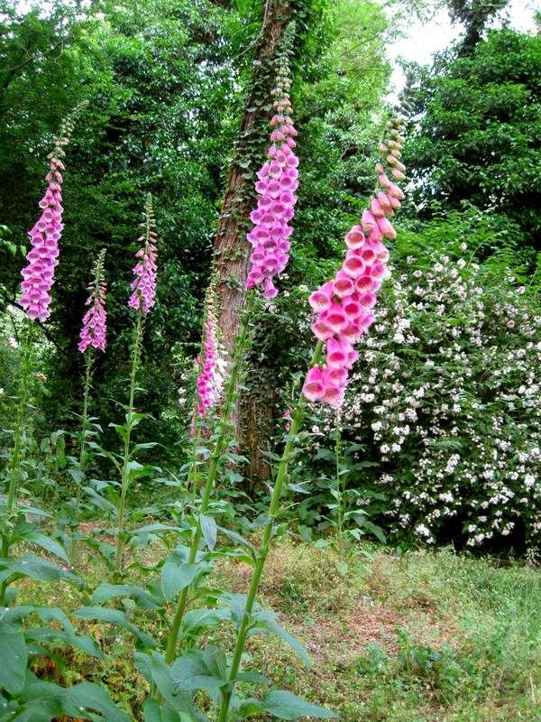 Ultimissime dall'orto: Giardini del Casoncello