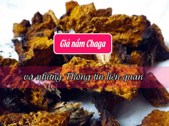 Giá nấm Chaga và những thông tin liên quan về nấm Chaga