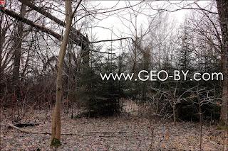 Щемыслица. Дубрава Чапского. Надломанное дерево