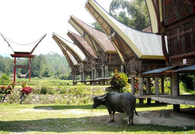 Contoh Desain Rumah Adat Sulawesi Selatan
