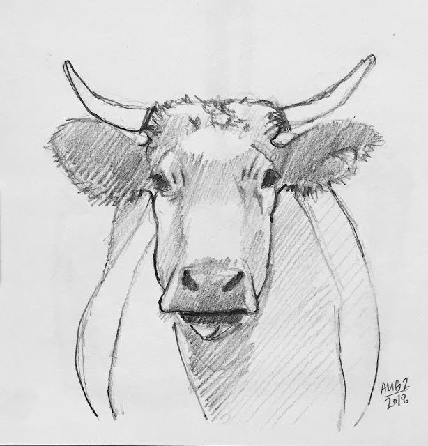 Daily Art 08-02-2018 sketch of a cow