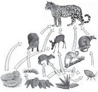 yaitu makhluk hidup heterotrof yang memakai zat Pengertian Konsumen