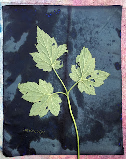 Wet cyanotype, Sue Reno, Image 29