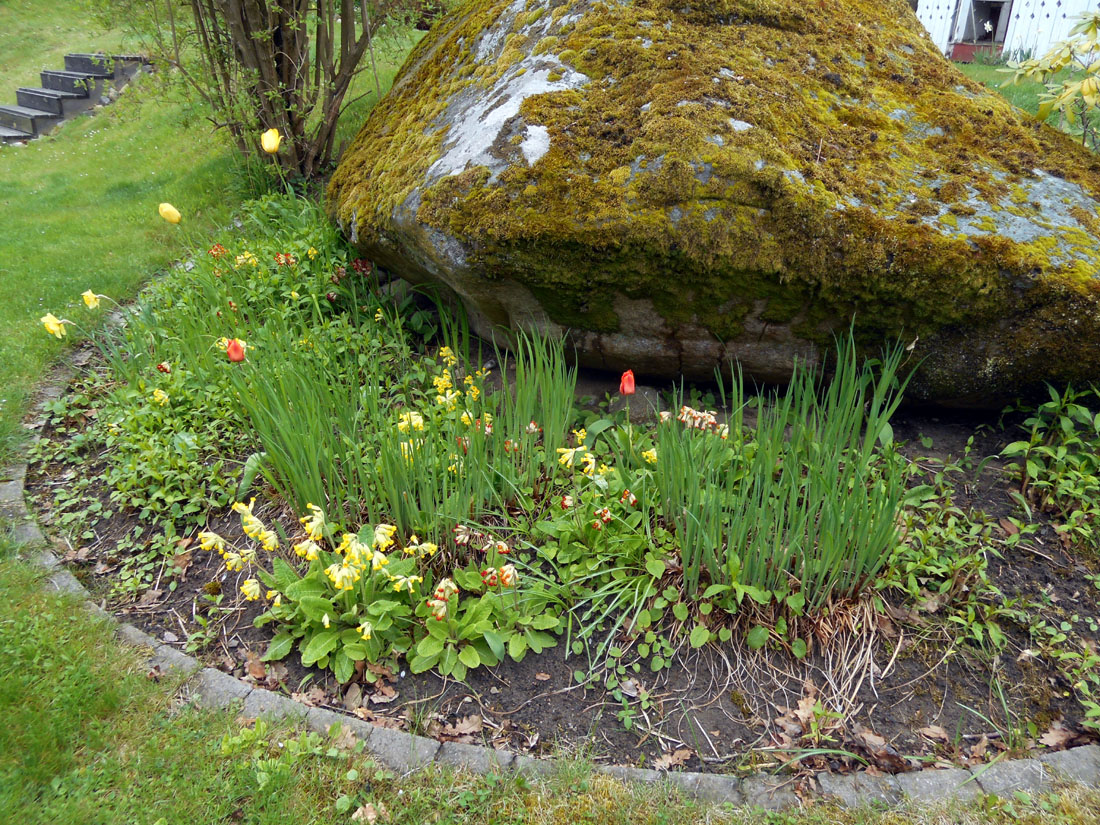 In attesa della fioritura degli iris