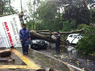 pohon tumbang akibat angin ribut