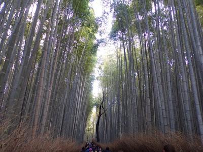 bosque bambu, arashiyama