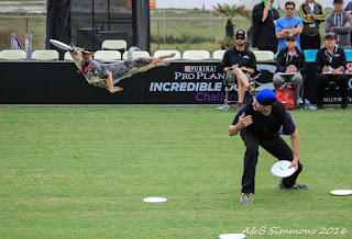 Purina Disc Dog Competition, Huntington Beach, CA