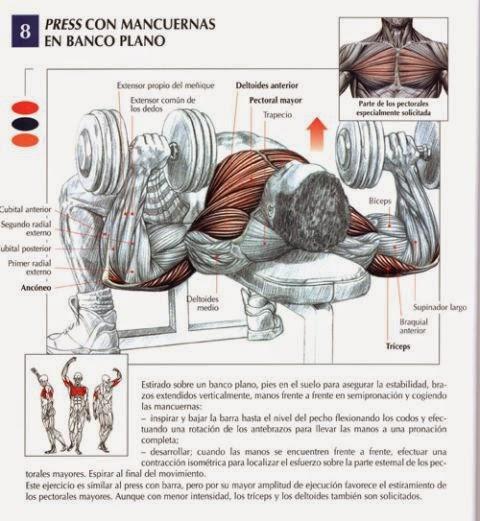 musculos implicados en el press de banca