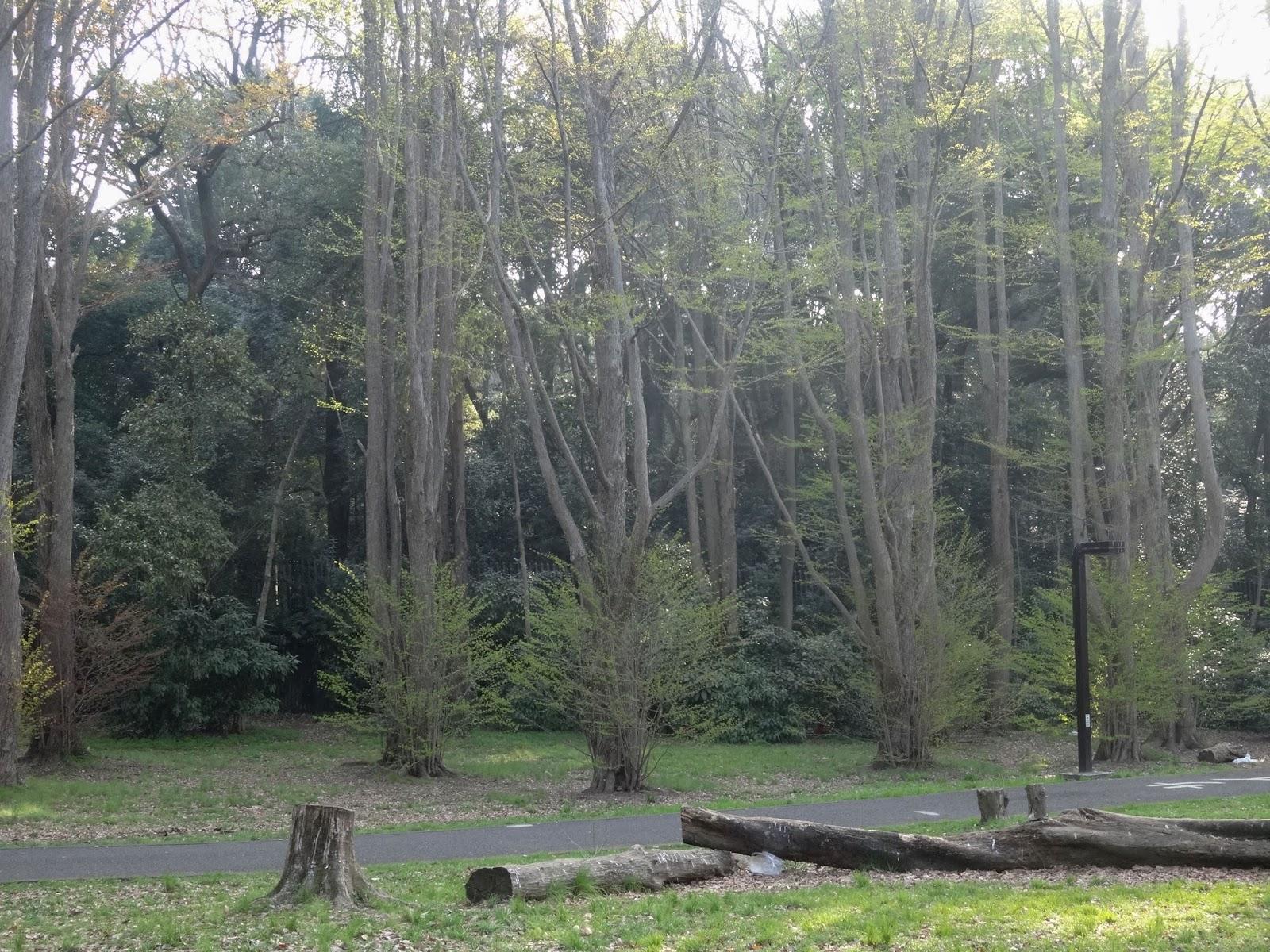森林,代々木公園〈著作権フリー画像〉Free Stock Photos