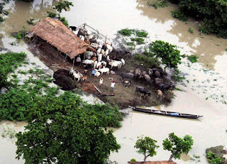 assam-flood-toll-reaches-56