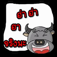 Sunji buffalo