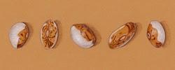 http://www.sarahmelling.blogspot.com/2014/01/hidatsa-shield-figure-beans.html