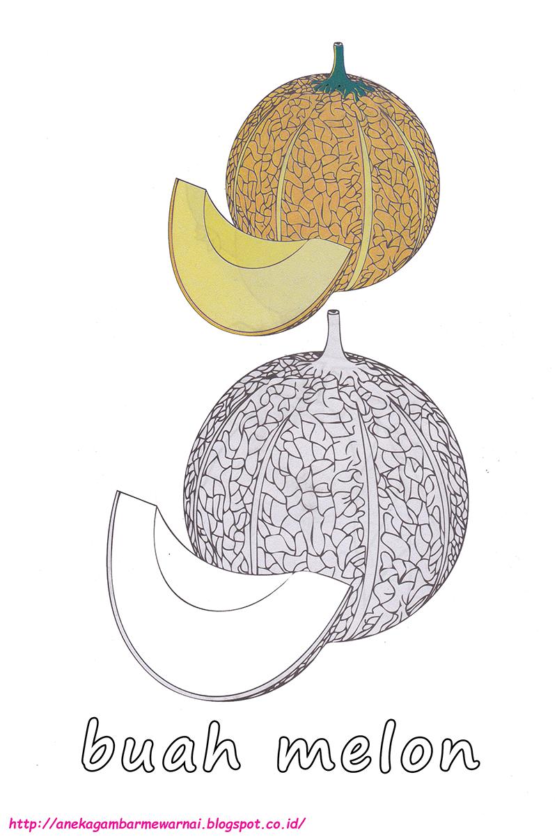 Gambar Mewarnai Buah Melon Untuk Anak Paud Dan Tk