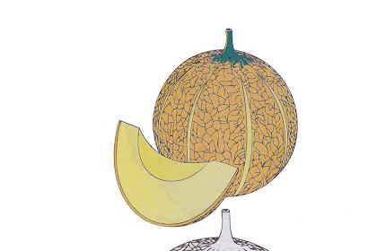 Gambar Mewarnai Melon