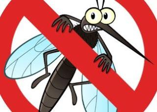 Bahan Rumahan Yang Ampuh Mengusir Nyamuk
