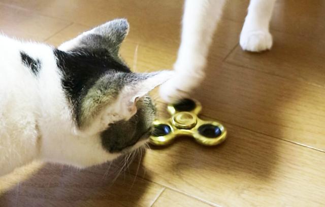 猫とハンドスピナー