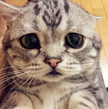 Kucing paling Menyedihkan Di Dunia,ini 7 Fotonya yang Bikin Nggak kuat