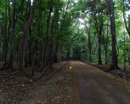 hutan angker, hutan tua alas purwo