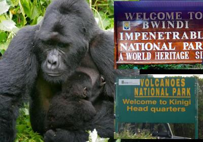 Gorilla Tour Uganda Rwanda 11 Days – Tour Rwanda Uganda Gorillas