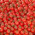 Tomateros mexicanos pagarán desde hoy arancel de 17.5% a EE. UU.