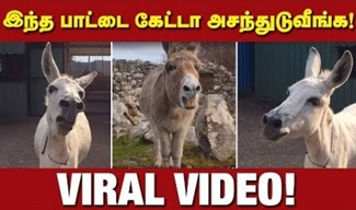 Donkey Viral Video | IBC Tamil Tv