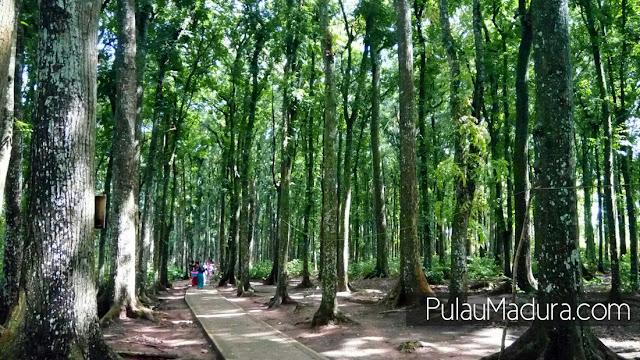 Hutan di Wisata Bukit Geger Madura