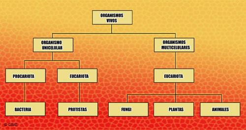 Estructura Celular Teoría Celular