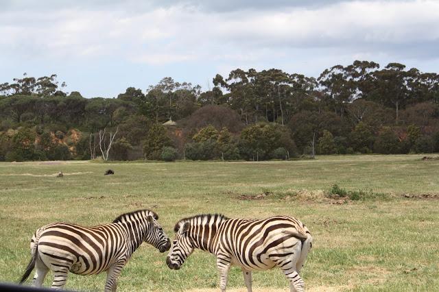 Werribee Zoo Safari