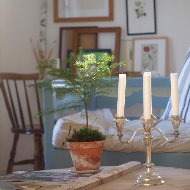 Lille juletræ i potte