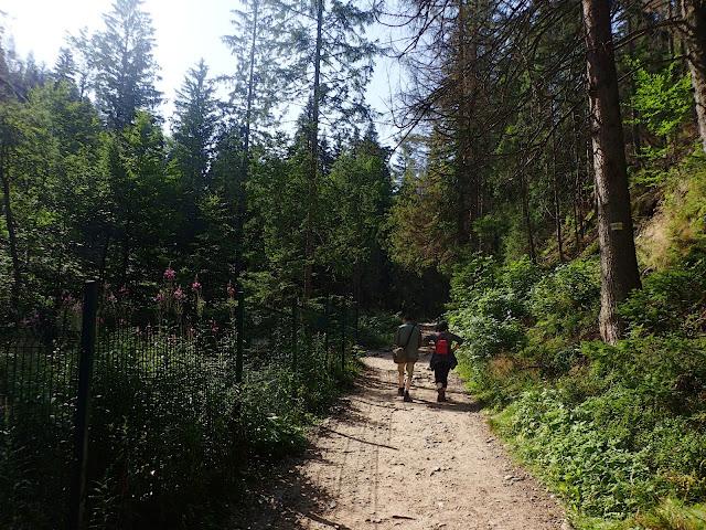 Dolina Jaworzynki, niedaleko Kuźnic