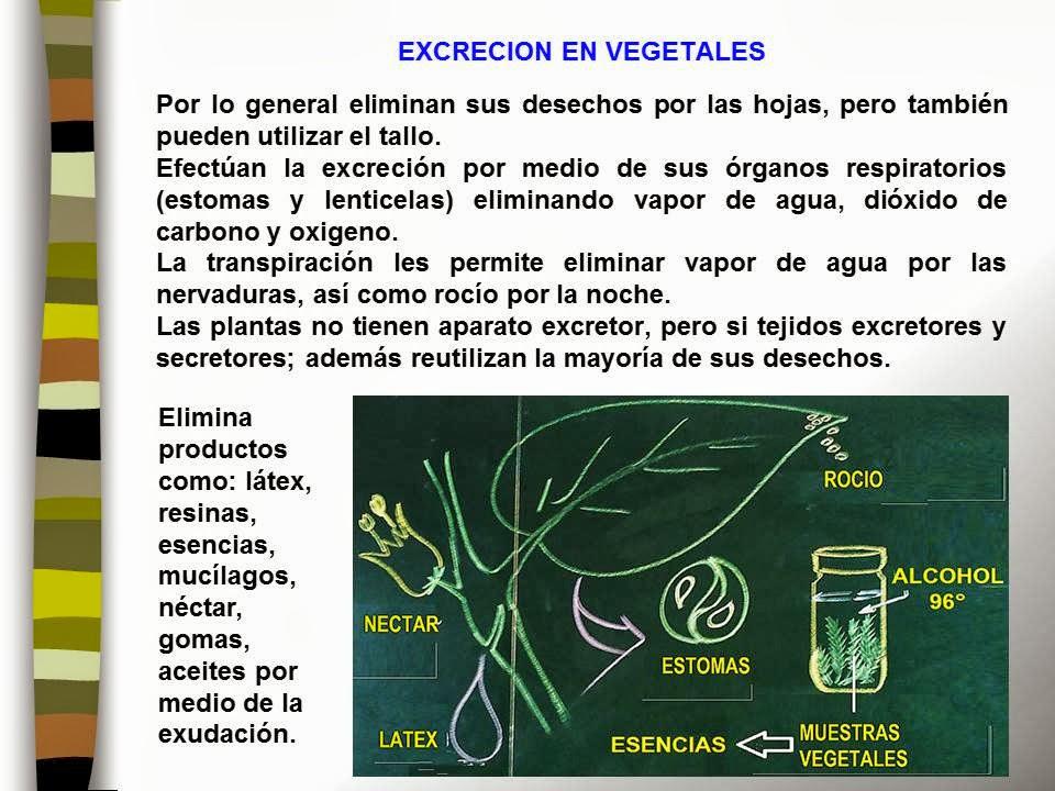 Metabolismo celular pau
