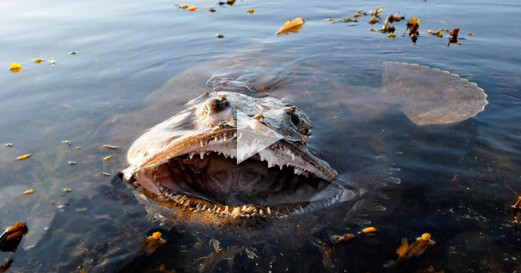 "A closer look to one of the world's ""most terrifying"" sea creatures"