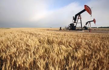 As sementes do suicídio - Como a Monsanto destrói a agricultura (e a vida dos agricultores)