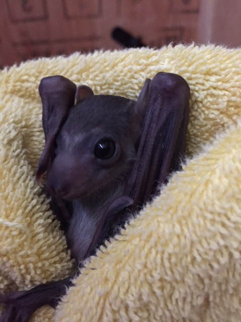 Baby Animals: Bat - Pup 4