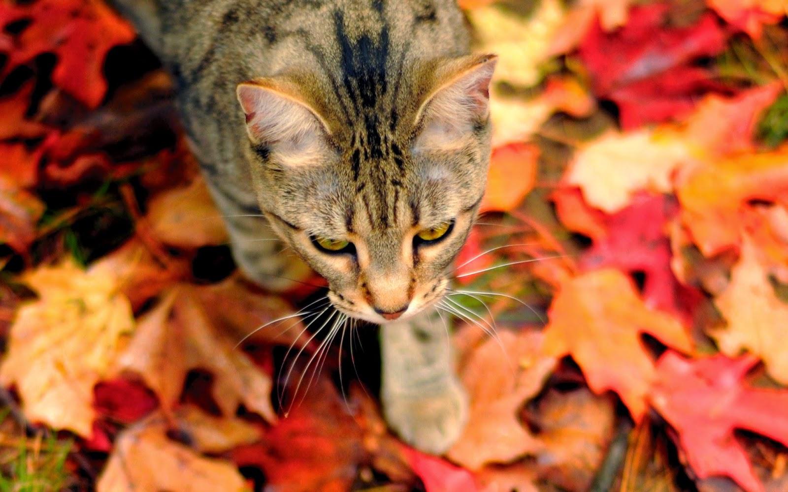 Малюнки осінь