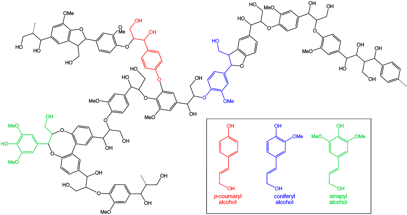 How About Lignin Lignin Structure