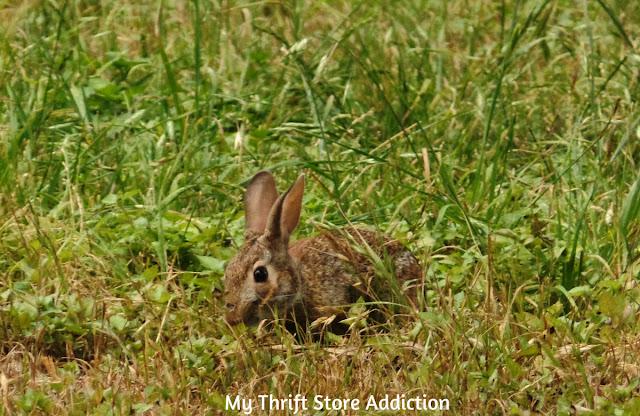 bunny garden helper
