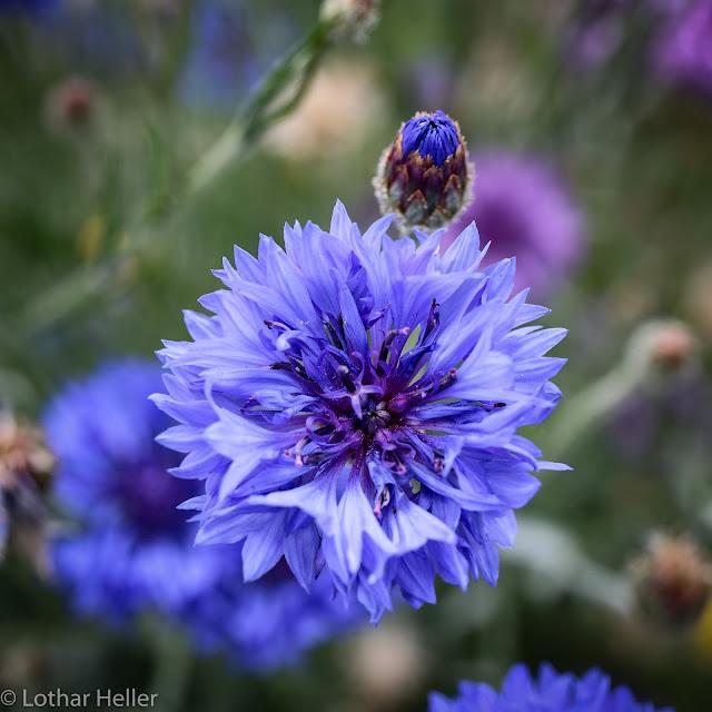 Pflanze Blume Flower