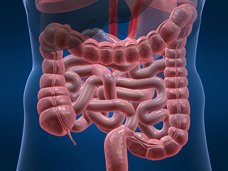 intestini