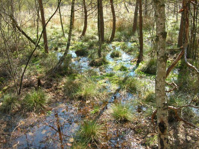 drzewa, bagno, torfowisko, obicie w wodzie
