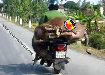 SemenPadangFC