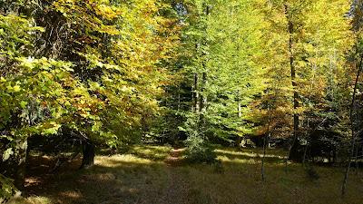Trail im Unterwald bei Herzogenbuchsee