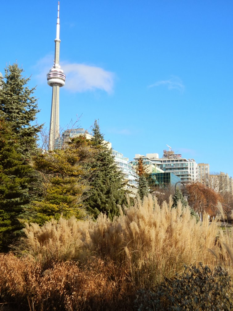 Toronto Music Garden winter CN Tower by garden muses-a Toronto gardening blog