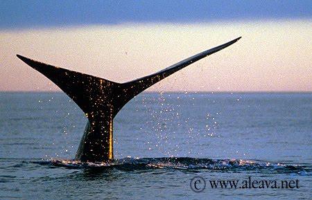 Walbeobachtung und Beobachtung anderer  Meeresbewohner
