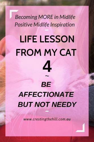 There are life lessons that can be learned from cats - this is lesson #4 - learn to respect boundaries - be affectionate but not needy #inspiration #lifelesson