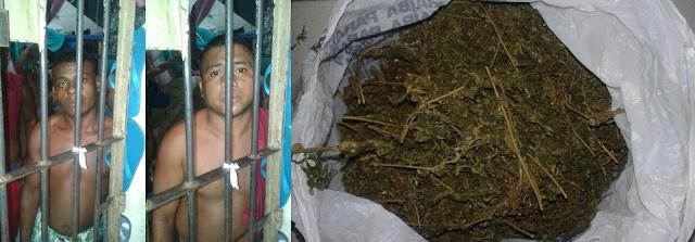 Traficantes são presos com grandes quantidades de Drogas em Tutóia e Agua Doce, pelas Polícias Militar e Civil