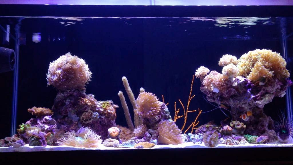 Aquascape Eye Candy 11 Examples For Inspiration Marine Depot Blog